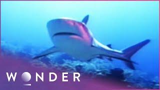 Top 10 Dangers At Sea   Wonder