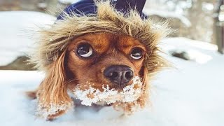 Funniest Dogs In Snow Videos 🤣 (Part 2) [Funny Pets]