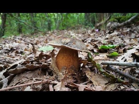 Guarito unghie di fungo vecchie
