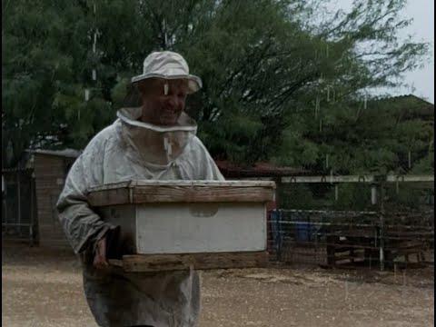 איך הדבורים מסתדרים עם הגשם • צפו בעדכון