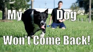 My Dog Takes Off and Won't Come Back! How to Train Your Dog