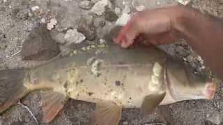 şamandırayla sazan avı float fishing for carp part2 kızılcahamamankara