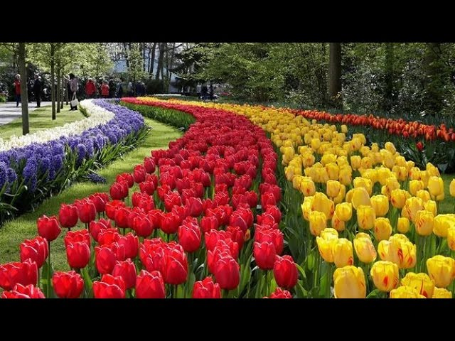 荷蘭‧鬱金香花季幸福推薦❤