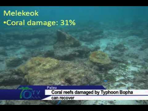 Corals Damaged by Typhoon Bopha Can Recover