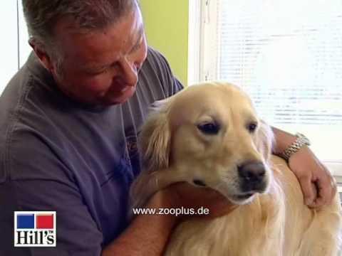Hill's Canine Senior Large Breed Hundefutter