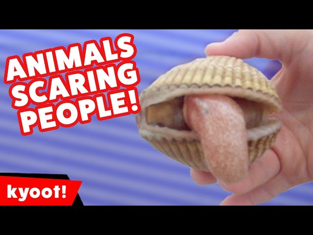 Funniest Animals Scaring People Reactions of 2016 Weekly Compilation   Kyoot Animals