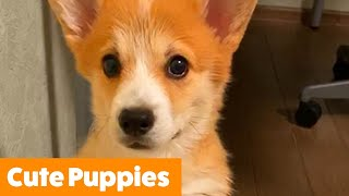 Cutest Silly Puppies | Funny Pet Videos