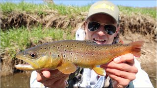 HAVE YOU EVER SEEN COLORS LIKE THAT?! (Fly fishing Wisconsin Driftless Region - Mill Creek)