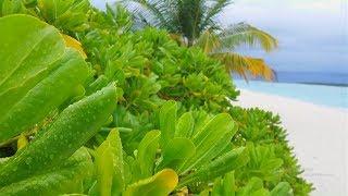 Rainy Day In The Maldives - Holiday Island Resort
