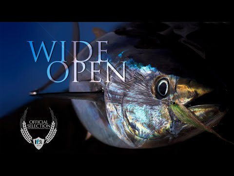 Wide Open - My First Film Festival Film! Fly Fishing for Yellowfin Tuna in San Diego!
