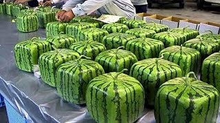 Amazing Food Processing -  How It's Made Watermelons Factory
