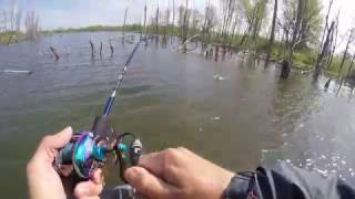 TopWater Bass Fishing MegaBass PopMax