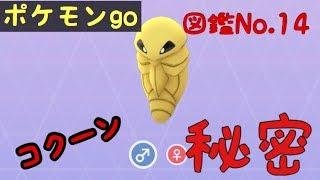 コクーン  - (ポケットモンスター) - 【ポケモンgo】図鑑No.14 コクーンの秘密