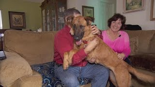 Dog That Watched Her Family Adopt Another Pet At Shelter Gets New Home
