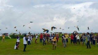 Gathering Free Flight Indonesian Parrot Lovers At Bandung