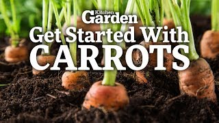 How to Get Started Growing Carrots | Sowing Carrots