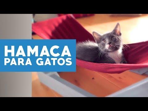 ¿Cómo hacer una hamaca para gatos?