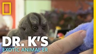Helping Out a Tiny Monkey | Dr. K's Exotic Animal ...