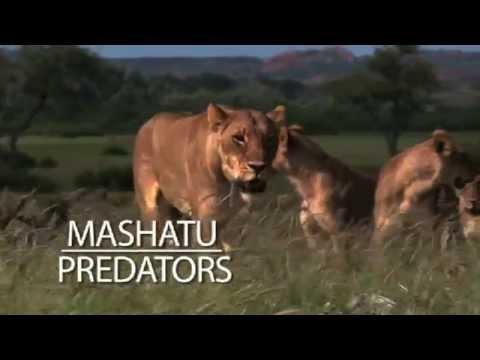 Mashatu predators, filmed by Aquavision on Mashatu Game Reserve, Botswana.