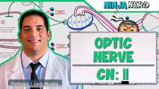 Neurology | Optic Nerve | Cranial Nerve II: Visual Pathway and Lesions