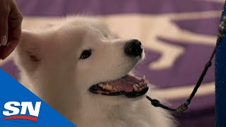 Best Of The 2021 Westminster Kennel Club Dog Show