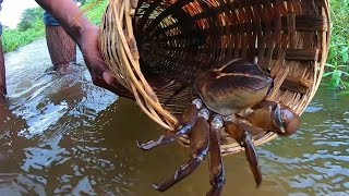 Traditional Bamboo Crab Trap Making   And Catching Many Crabs,खेकडे पकडण्याची टोकरी