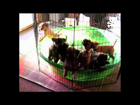 Suddenly... Puppies!