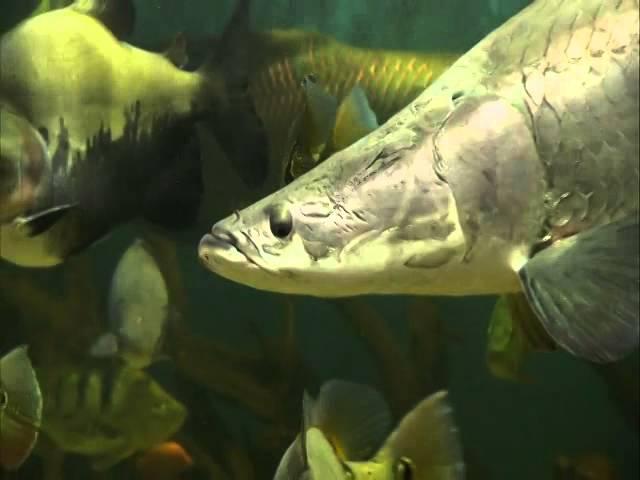 John Marcus Monstrous 10,000 Gallon Aquarium