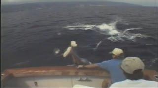 Рыболов возвращаясь с рыбалки заехал по дороге