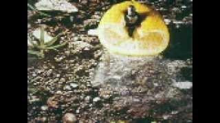 31 Dicembre 1999 - ore 9 - (Franco Battiato- Pollution 1973)