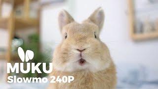 หนูไวนักวันนี้เลยจับมาทำช้าๆให้พี่ๆดู 🐰 MUKU in Slowmotion 240P