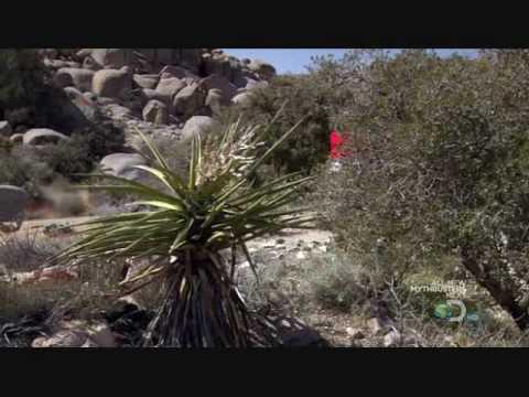 The Tarahumara - A Hidden Tribe of Superathletes Born to Run