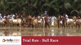 Trial Run before the bull race at Kakkoor