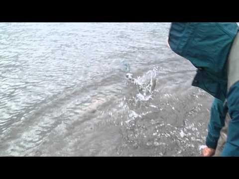 Salmon y Bota Marzo 2014