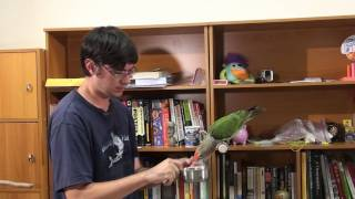 How to Train Parrot to Fetch - Retrieve Trick