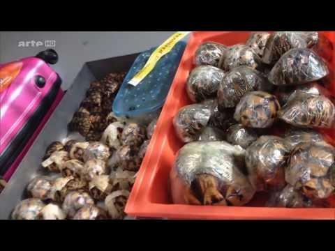 Élelmiszer helminták fertőzés háztartási cikkek