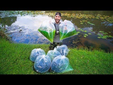 Stocking Pond With 3,000+ Wild Bait Fish!! (12lb bass)