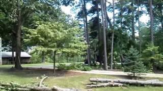Timber, tree falling.