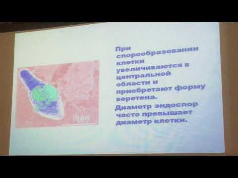 Возбудители раневых инфекций. Анаэробы. Хромова 1.
