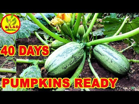 , title : 'How to grow quick pumpkins