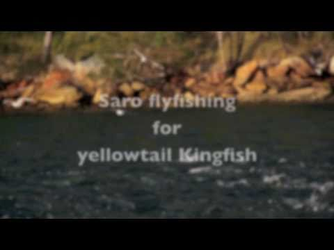 Yellowtail Kingfish on Fly in Pittwater - Sydney Flyfishing Tours