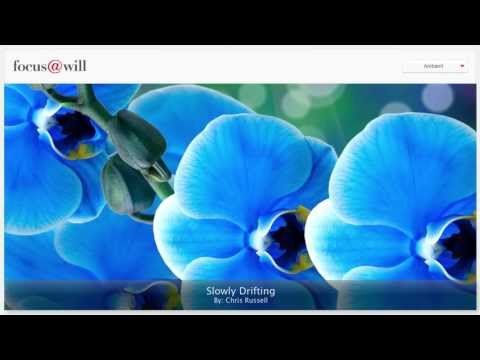 Ambient Music for Study • Work • Focus • Concentration • 1 Hour