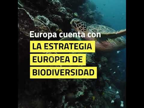 Cafecito con Europa: Océanos saludables