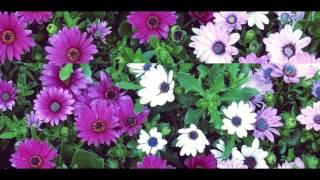Pinkshinyultrablast - Marigold 🌸