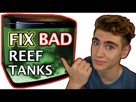 3 REASONS YOUR REEF TANK LOOKS HORRIBLE!
