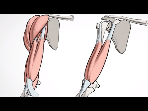 Nazwy mięśnie ramion