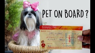How to travel with dog in flight | Pet on flight in Air India | Dog In Cabin