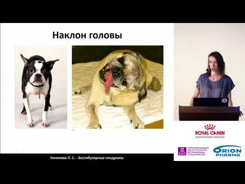 Коникова Л.С. - Вестибулярные синдромы