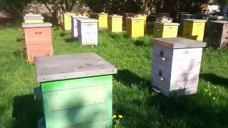 Пчелы 2018 - Подводим итоги перед майским взятком
