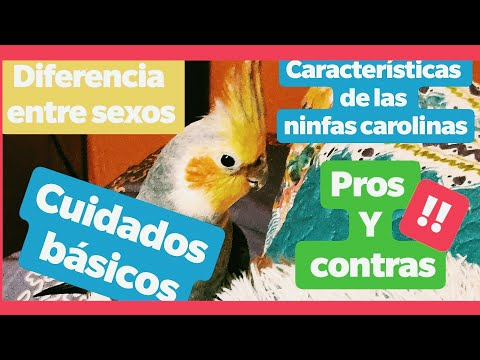 Mujeres Porno sexo con perros